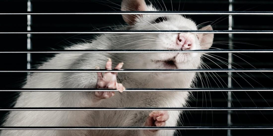 rat_2_orig